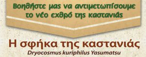 Η σφήκα της καστανιάς Dryocosmus kuriphilus Yasumatsu