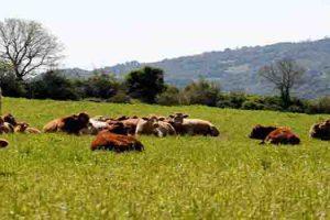 Βιολογική Κτηνοτροφία