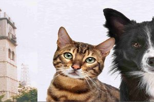 Ημερίδα με θέμα: Ζώα συντροφιάς, μεταδιδόμενα νοσήματα και νεότερες αντιλήψεις στην Παρασιτολογία και τη Χειρουργική των μικρών ζώων - Αφίσα