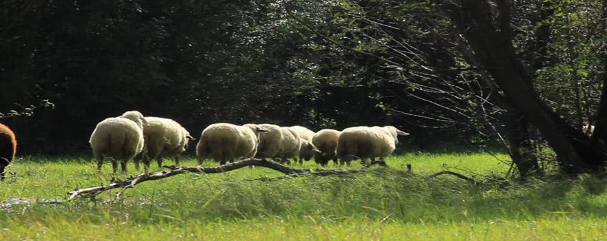 Κτηνοτροφία Βοσκοτόπια