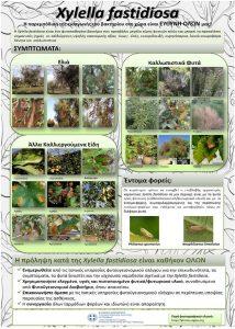 Ενημέρωση για τον Οργανισμό καραντίνας Xyllela fastidiosa - Αφίσα