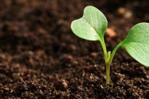 καλλιέργειες