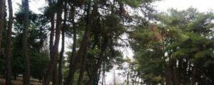Π.Ε. Κοζάνης: Υλοτομία επικίνδυνων δένδρων στον δρόμο προς Λευκόβρυση