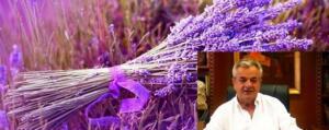 Π.Ε. Κοζάνης: Έρευνα αξιοποίησης αιθέριου ελαίου και ανθόνερου λεβάντας και ρίγανης